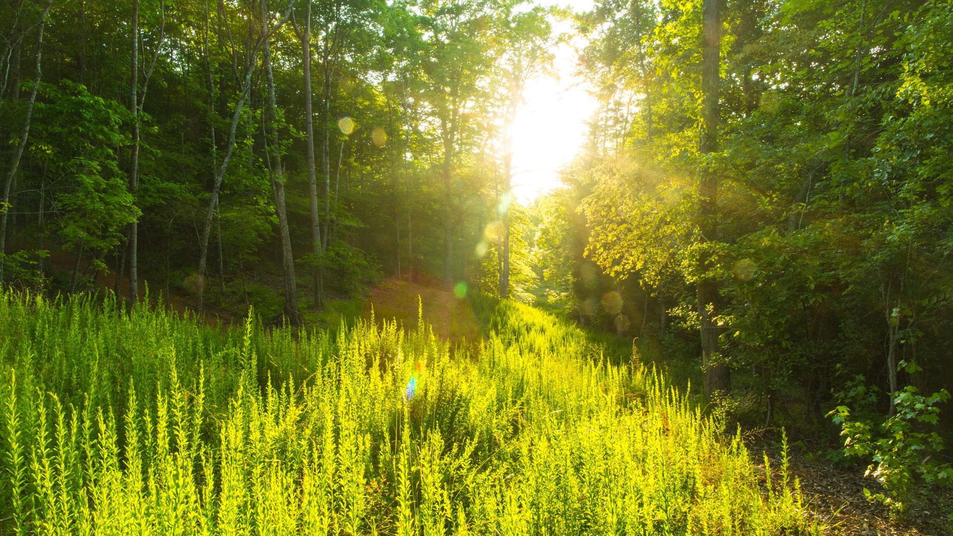 SunThroughTrees_Landscape